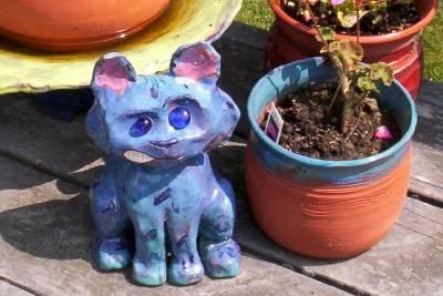 blue cat close